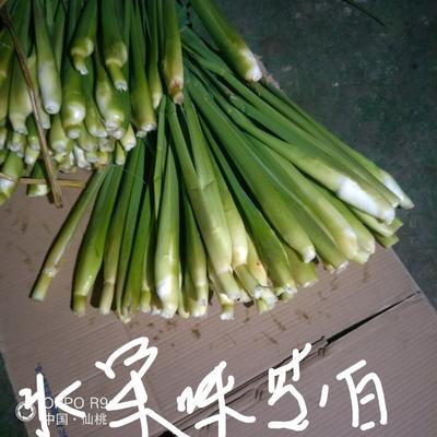 湖北省湖北省仙桃市双季茭白 10-15cm
