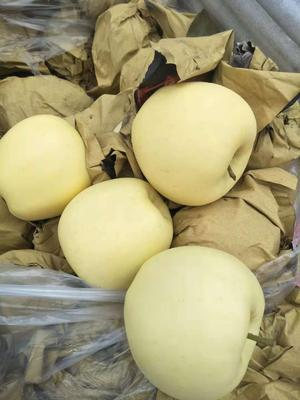 这是一张关于黄元帅苹果 纸袋 表光 75mm以上的产品图片