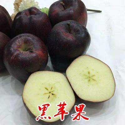 山东省临沂市平邑县黑钻石苹果苗 1~1.5米