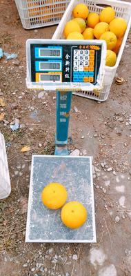 这是一张关于信丰脐橙 100mm以上 15.0两的产品图片