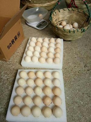 这是一张关于山地鸡鸡蛋 食用 箱装的产品图片