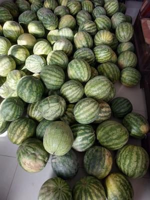 甘肃省白银市靖远县硒砂瓜 有籽 1茬 10成熟 5斤打底
