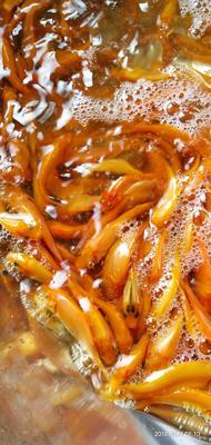 广西壮族自治区南宁市江南区荷包红鲤鱼 人工养殖 0.05公斤
