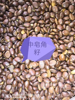 这是一张关于皂角种子的产品图片