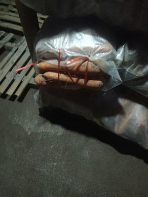 河北省衡水市饶阳县三红胡萝卜 15cm以上 2两以上 3~4cm