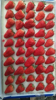 这是一张关于丹东草莓 20克以上 的产品图片