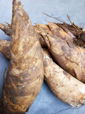 这是一张关于江西冬笋 9~13cm 鲜笋的产品图片