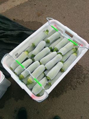 云南省红河哈尼族彝族自治州弥勒市绿皮西葫芦 0.4斤以上