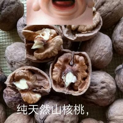 辽宁省葫芦岛市绥中县山核桃