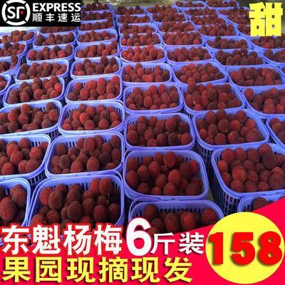 浙江省台州市仙居县东魁杨梅 3 - 4cm