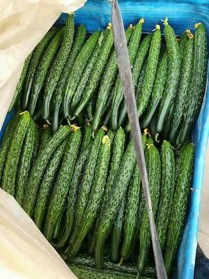 这是一张关于密刺黄瓜 30cm以上 干花带刺的产品图片
