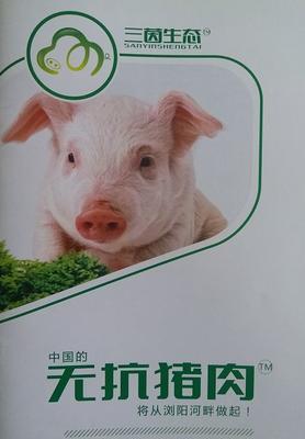 湖南省长沙市浏阳市无抗猪 200-300斤