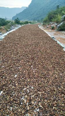 广西壮族自治区贺州市昭平县现榨山茶油