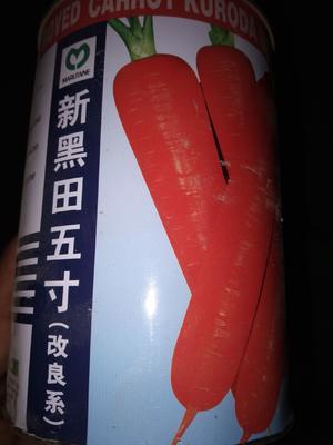 河南省南阳市新野县黑田五寸胡萝卜 10~15cm 2两以上 3~4cm