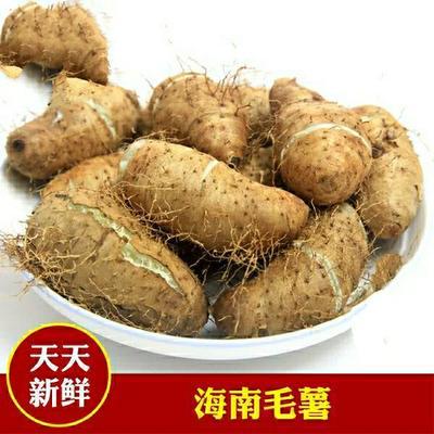 海南省定安县定安县毛薯  2-5两 海南特产甜薯