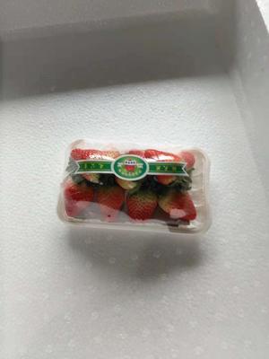 安徽省阜阳市临泉县天仙醉草莓 20克以上
