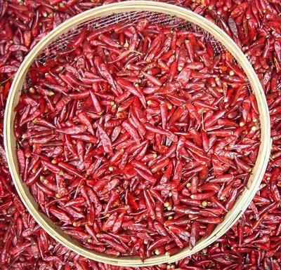 这是一张关于三樱椒 2~5cm 红色 微辣的产品图片