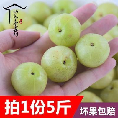 福建省泉州市惠安县野生余甘果 2cm以上