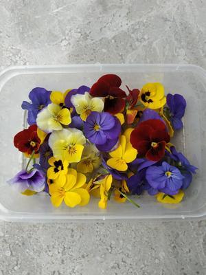 这是一张关于角堇的产品图片