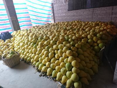 这是一张关于沙田柚 2斤以上 的产品图片