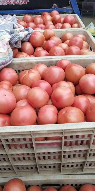 硬粉番茄 不打冷 硬粉 通货