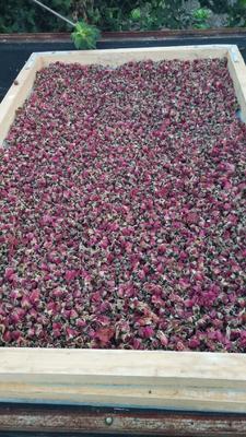 吉林省吉林市桦甸市玫瑰花茶 袋装 一级