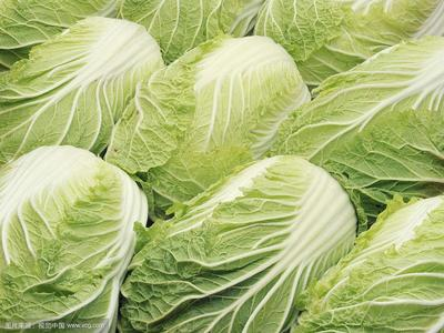 这是一张关于黄心大白菜 1~2斤 净菜的产品图片