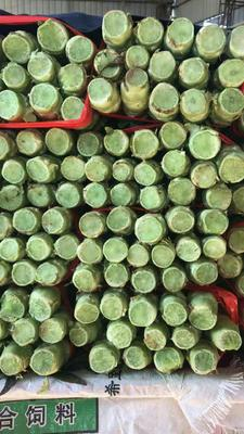 山东省临沂市郯城县红叶香莴苣 40-50cm 1.5~2.0斤