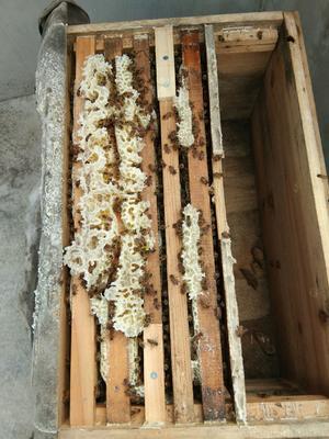 贵州省黔南布依族苗族自治州独山县土蜂蜜 塑料瓶装 98% 2年以上
