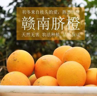 这是一张关于赣南脐橙 80-85mm 4-8两 的产品图片