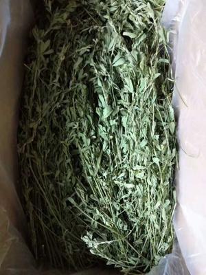 这是一张关于苜蓿草种子的产品图片