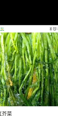 安徽省亳州市利辛县雪里红芥菜