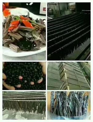 广东省广州市花都区鱼干类