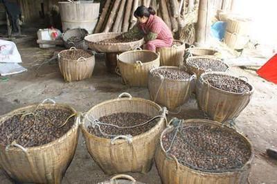 湖南省郴州市北湖区野生山茶油