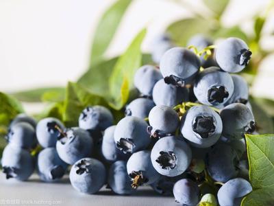 山西省运城市临猗县蓝丰蓝莓 鲜果 8 - 10mm以上