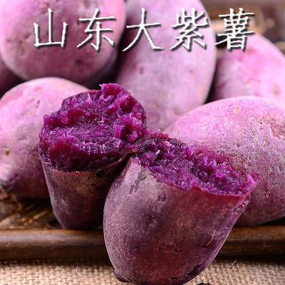 山东省泰安市新泰市紫罗兰紫薯 3两~6两