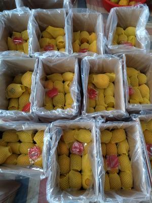 广西壮族自治区柳州市柳江县脆柿 3 - 4两以上