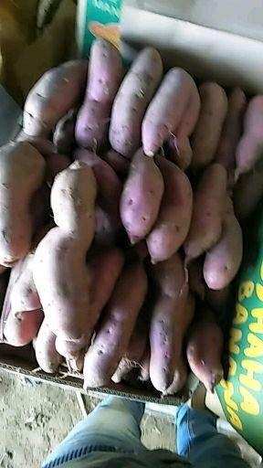 早丰红薯 红皮 混装通货