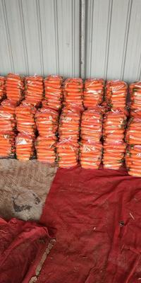 河南省开封市祥符区六寸参胡萝卜 15cm以上 2两以上 3~4cm