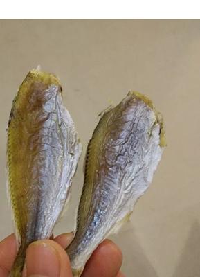 这是一张关于划条鱼 的产品图片