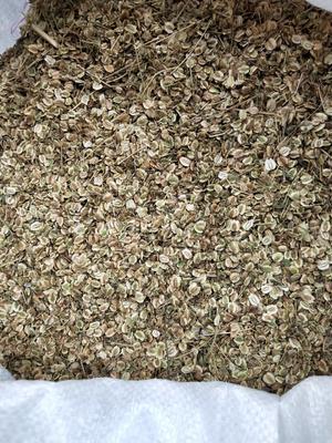 这是一张关于白芷种子的产品图片
