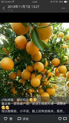 这是一张关于麻阳冰糖橙 55mm以下 4两以下的产品图片