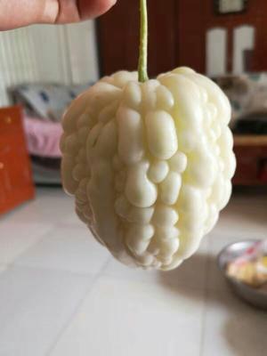 山东省济南市历城区苹果苦瓜 18cm以下 2两以下