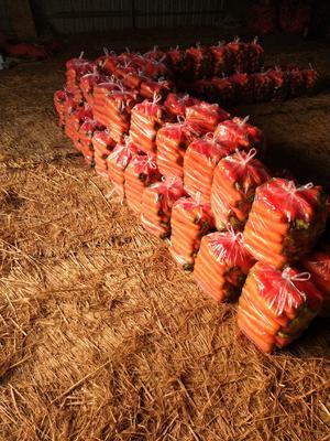 河南省开封市通许县三红胡萝卜 10~15cm 3两以上 4~5cm