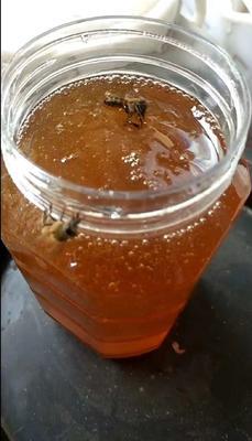 江西省抚州市黎川县土蜂蜜 玻璃瓶装 100% 2年以上