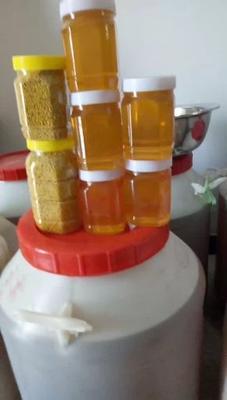河南省商丘市梁园区槐花蜜 塑料瓶装 100% 2年以上