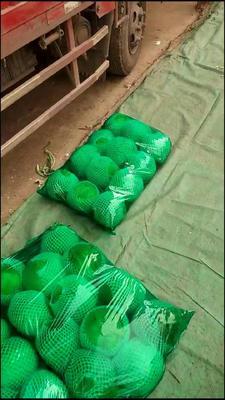 这是一张关于绿甘蓝 2.0~2.5斤的产品图片