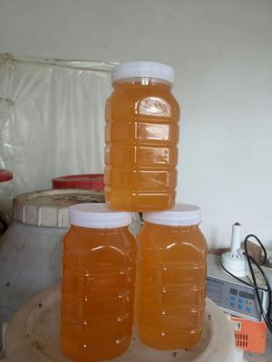 河南省商丘市民权县洋槐蜂蜜 塑料瓶装 100% 2年