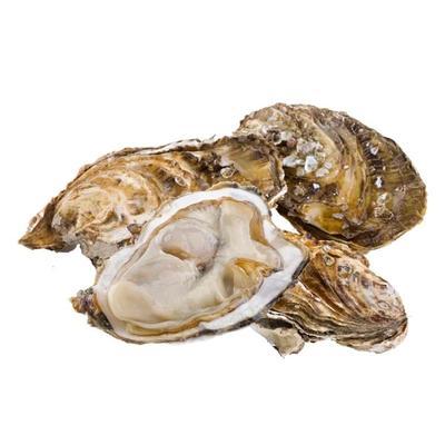 这是一张关于烟台海阳海蛎 人工殖养 2-3两/只的产品图片