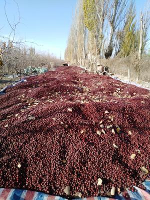 这是一张关于灰枣 统货的产品图片